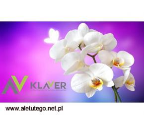 Holandia, praca od zaraz przy pielęgnacji kwiatów doniczkowych